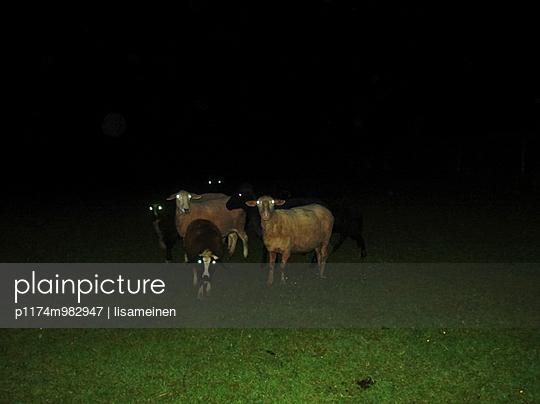 Schafe - p1174m982947 von lisameinen