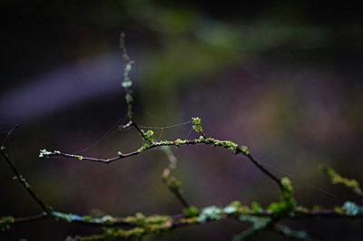 Moss - p1088m902179 by Martin Benner