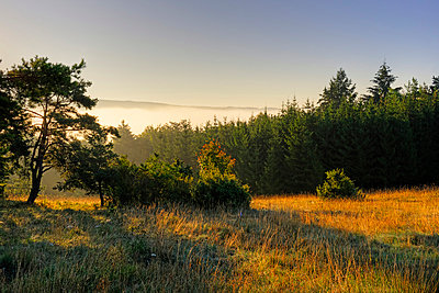 Germany, Bavaria, Upper Bavaria, Altmuehl valley, Schellenburg in front of the foggy Altmuehl valley - p300m873655 by Lisa und Wilfried Bahnmüller