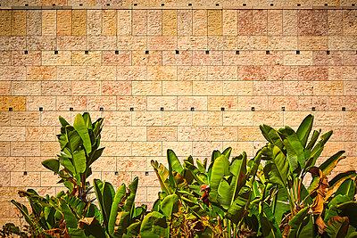Bananen in Belém - p900m1528568 von Michael Moser