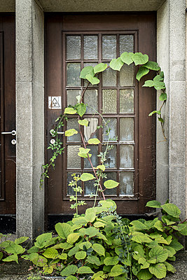 Overgrown door - p403m931332 by Helge Sauber