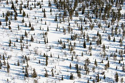 Tannenbäume im Schnee, Joukhaisselkä - p1079m1072963 von Ulrich Mertens