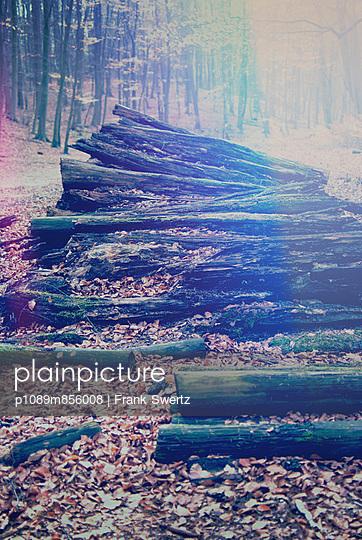 Verwesende Baumstämme - p1089m856008 von Frank Swertz