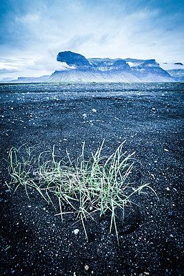 Gras auf schwarzem Sand - p1512m2037966 von Katrin Frohns