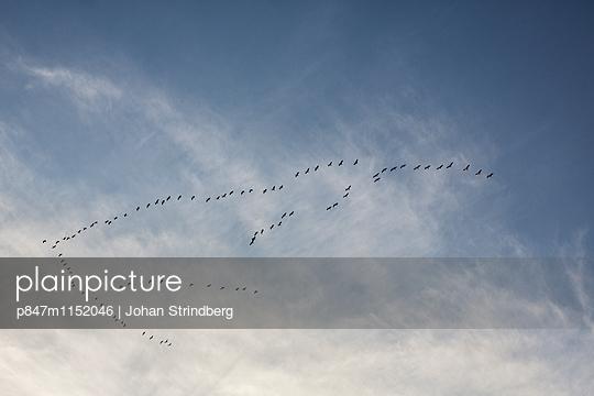 p847m1152046 von Johan Strindberg