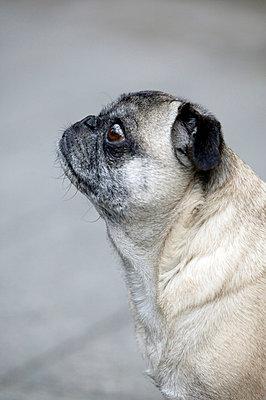 Dog's profile - p3880775 by L.B. Jeffries