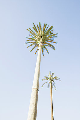 Low angle view of palm trees under blue sky - p555m1421479 by Chris Clor