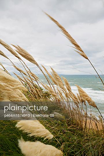 Strandgras - p464m1574913 von Elektrons 08