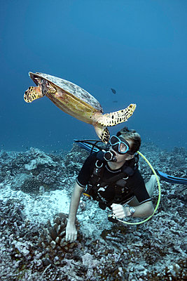 Diver swimming with hawksbill turtle - p42915587 by Zac Macaulay
