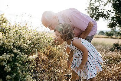 Senior man with granddaughter smelling flowers in field on sunny day - p300m2206773 by Josep Rovirosa