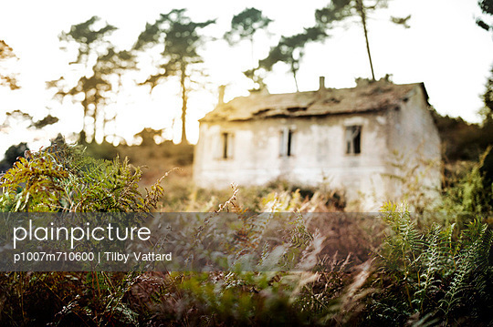 Primitive - p1007m710600 by Tilby Vattard