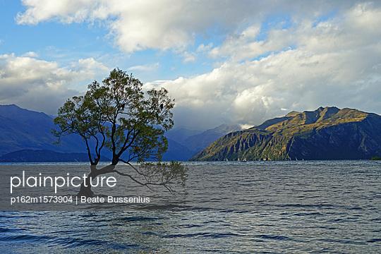 Eine Weide im See Wanaka   - p162m1573904 von Beate Bussenius