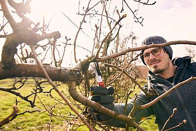 Farmer cutting branch of bare tree with pruning shears at organic farm - p300m2277605 by Sebastian Dorn
