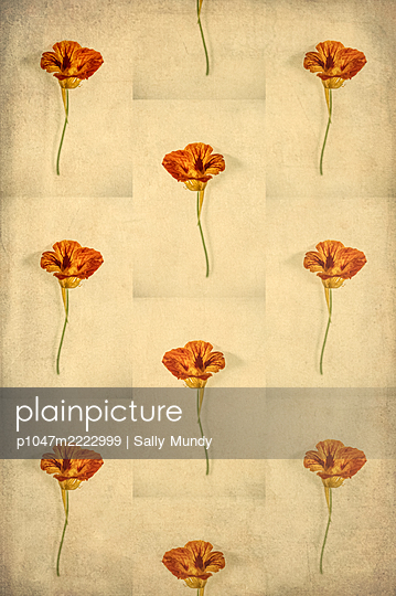 Computer generated abstract repeated pattern using nasturtium flower on sepia background - p1047m2222999 by Sally Mundy