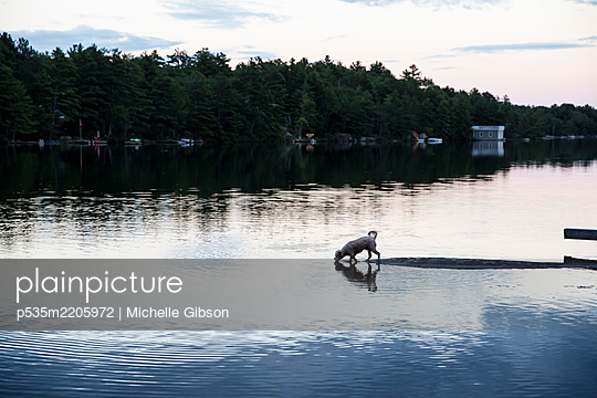 Dog Days of Summer - p535m2205972 by Michelle Gibson