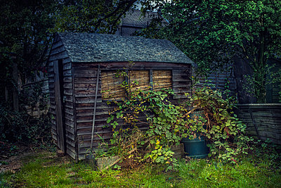 Wooden shed in overgrown garden - p555m1304966 by Chris Clor
