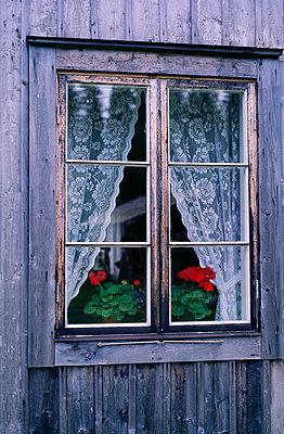 Flowers by window - p5751810f by Kjell Ljungstrom