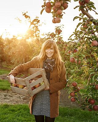 Frau mit Apfelkiste - p1124m1069635 von Willing-Holtz