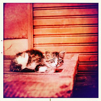 Porträt einer Katze - p819m972594 von Kniel Mess