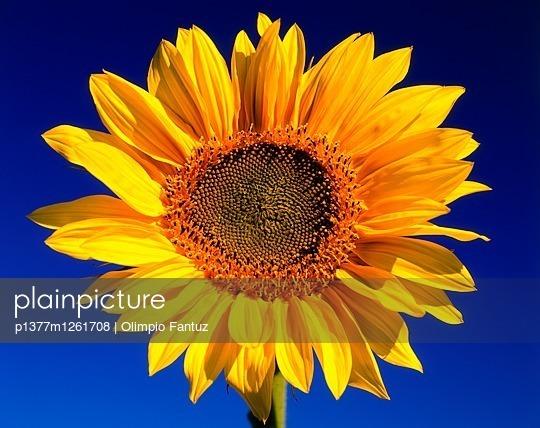 p1377m1261708 von Olimpio Fantuz