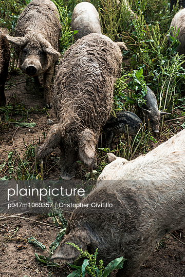Inflected - p947m1069357 by Cristopher Civitillo