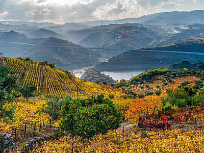 Autumn coloured vineyards on a hillside with a river winding through the mountainous landscape, Douro Valley, Northern Portugal; Portugal - p442m2111500 by Keith Levit