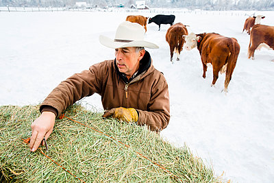 Caucasian farmer hauling hay in snowy field - p555m1312068 by Inti St Clair