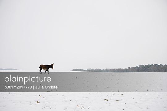 p301m2017773 von Julia Christe