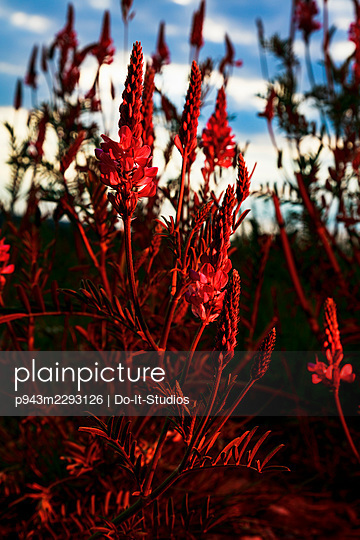 Red plants - p943m2293126 by Do-It-Studios