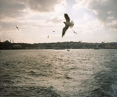 Sea Gulls above the Bosporus - p828m758019 by souslesarbres