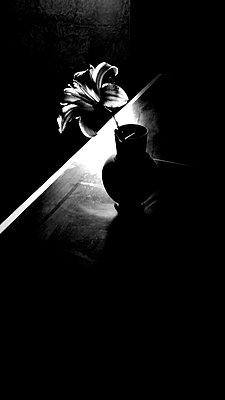 Daylily in a flower vase - p945m2181563 by aurelia frey