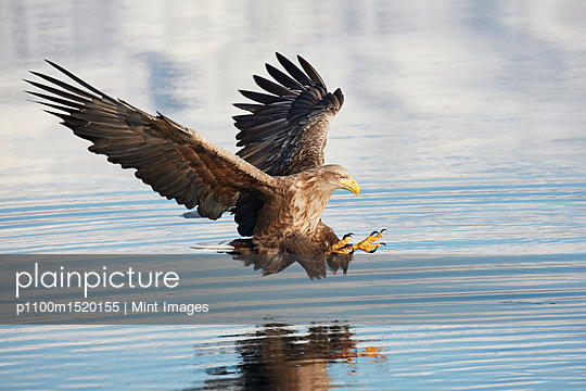 p1100m1520155 von Mint Images