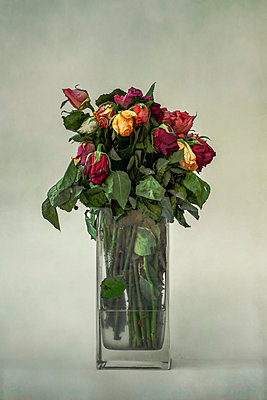 Dead roses - p1228m1209120 by Benjamin Harte