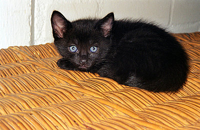 Schwarzes Katzenkind - p1650195 von Andrea Schoenrock