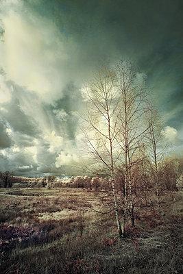 Herbstliche Landschaft - p1653m2232291 von Vladimir Proshin