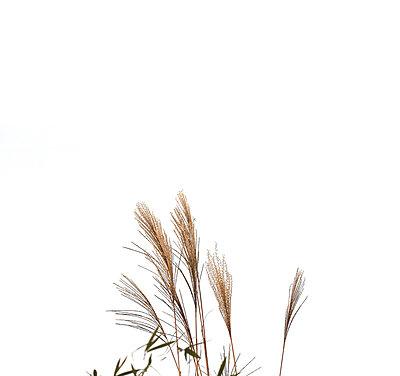 Gräser - p4500397 von Hanka Steidle