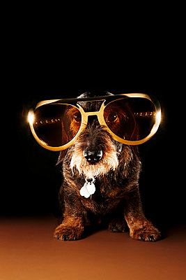 Dog with glasses - p851m955157 by Lohfink
