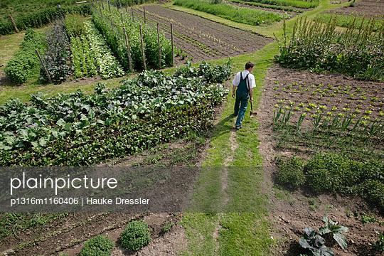 Landwirt zwischen Gemüsebeeten, biologisch-dynamische Landwirtschaft, Demeter, Niedersachsen, Deutschland - p1316m1160406 von Hauke Dressler