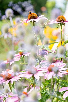 Pink flowers, close-up - p312m927110f by Ulf Huett Nilsson