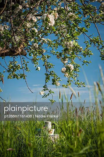 Picknick unter einem blühenden Apfelbaum - p1288m1161438 von Nicole Franke