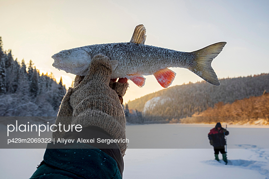 Landscape fishing on snow covered frozen lake, hand holding up caught fish, close up - p429m2069322 by Aliyev Alexei Sergeevich