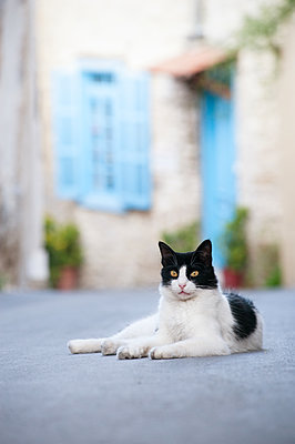 Stray cat lying in the street - p1580m2191511 by Andrea Christofi