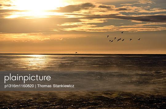 Seevögel im Meer an der Ringstraße, Küste unter dem Porsmörk, Südisland im Winter, Island - p1316m1160820 von Thomas Stankiewicz
