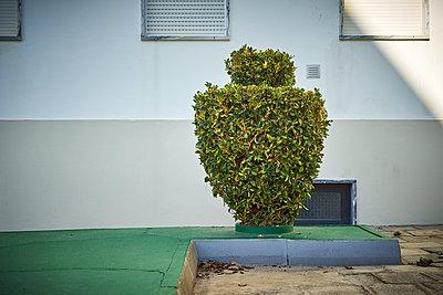 Amphore aus Buchsbaum - p1312m1222426 von Axel Killian