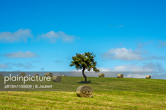 Bales of hay in the field - p813m1159509 by B.Jaubert