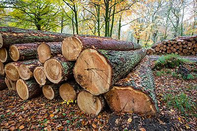 Cut trees piled up - p1057m1502853 by Stephen Shepherd