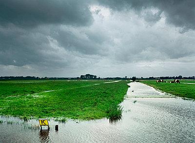 flooded farmland - p1132m1016965 by Mischa Keijser