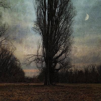 Half Moon - p1633m2208936 by Bernd Webler