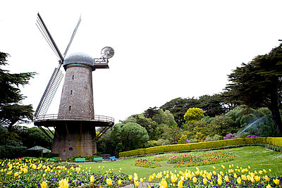 Tulpen vor der Mühle - p5350125 von Michelle Gibson