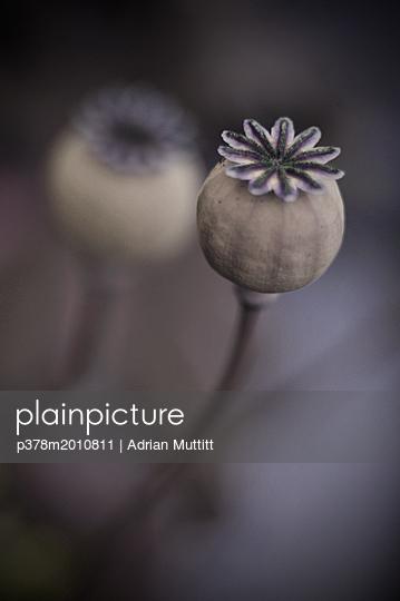p378m2010811 von Adrian Muttitt
